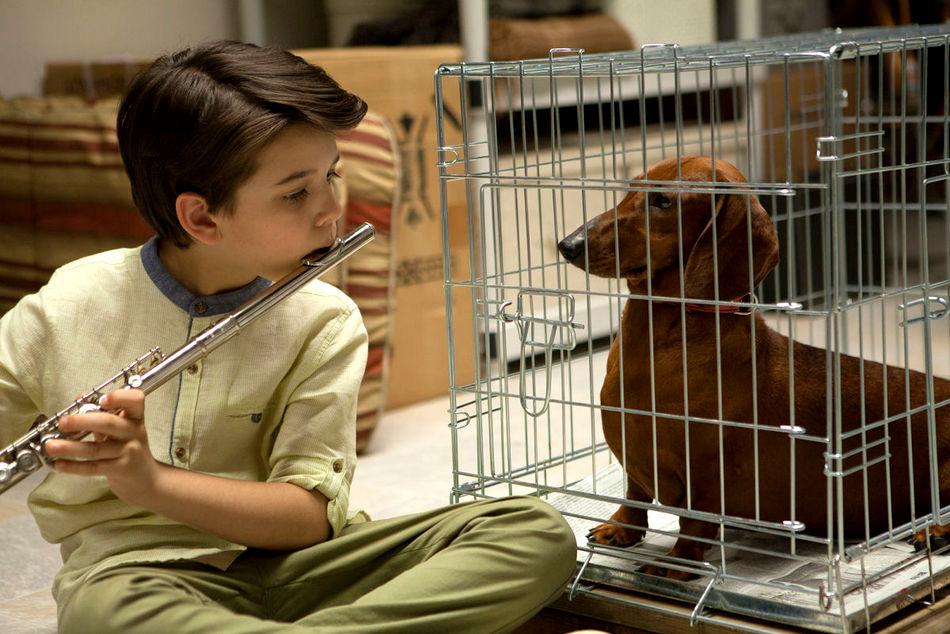 1-Todd Solondzs Weiner-Dog