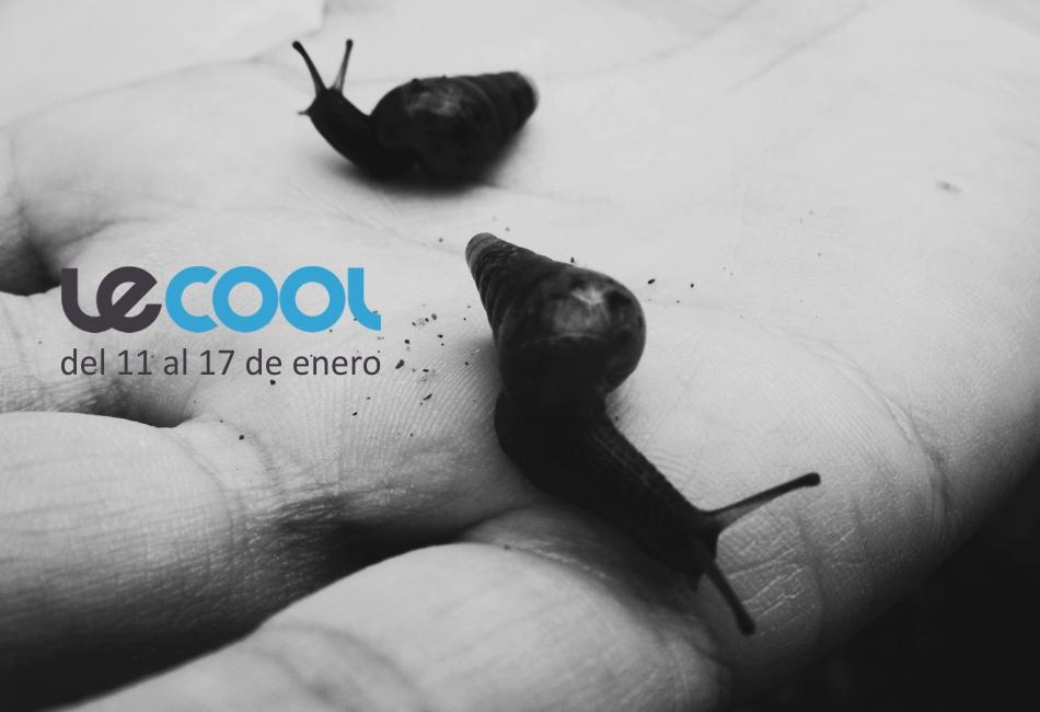 LECOOL (1)